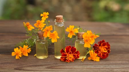 marigold essential oil Stok Video