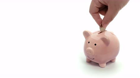 зарабатывать : saving money on pink piggy bank isolate. hand putting coin into pig doll bank on white background.