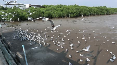 feeding seagull at Bangpu Samutprakan Thailand, March 20, 2018
