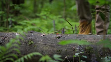 тропинка : Close up of trekking shoes. Human legs step over the log in the forest. Стоковые видеозаписи