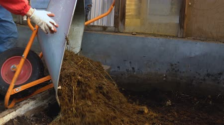 muck : Workers of the farm overturn the cart with cow manure in the greenhouse.