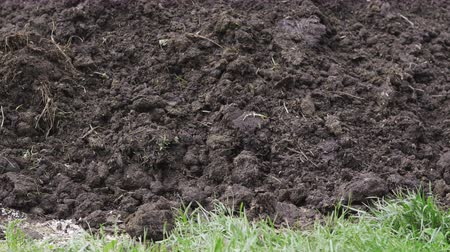 unpleasant smell : A heap of cow dung on the farm. The concept of ecological vegetable growing. Stock Footage
