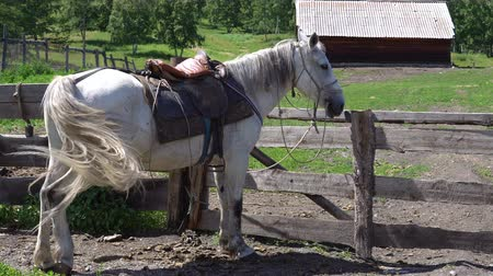 ограждение : A horse of white color is standing next to a pen in the countryside.