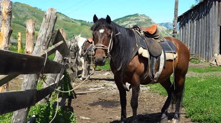 ограждение : A horse of brown color is standing next to a pen in the countryside in the mountains.