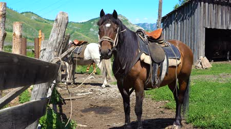 загон : A horse of brown color is standing next to a pen in the countryside in the mountains.