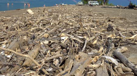 tuskó : Driftwood. The beach on which people bathe is littered with dry logs and branches. Stock mozgókép