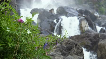 floresta tropical : Wild plants and grasses against the backdrop of a cascading mountain waterfall.
