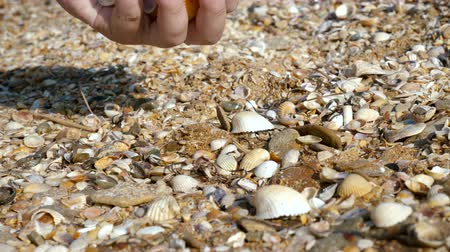 ulita : A young man collects shells on the sea beach. Close up. Dostupné videozáznamy