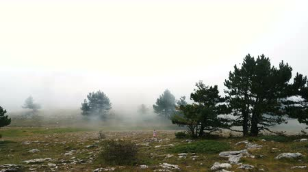 pesadelo : A little girl in pink clothes walks alone through a gloomy misty mountain forest. Vídeos