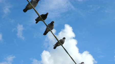 contra : Pigeons are sitting on a wire against the background of blue clear sky with white clouds.