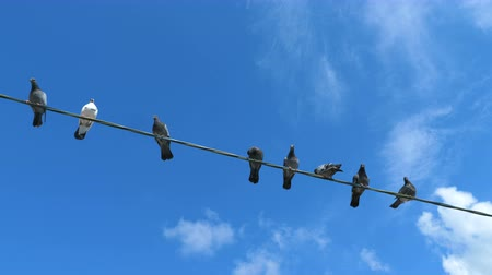 flapping : Pigeons are sitting on a wire against the background of blue clear sky with white clouds.