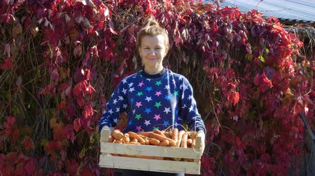 Виргиния : Young smiling woman with a crop of carrots in a wooden box in her hands. In the background, withered Five-leaved ivy (Parthenocissus quinquefolia, Virginia creeper) with red leaves.