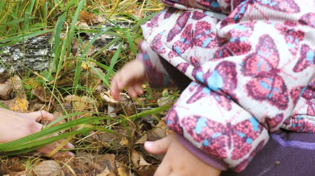 learning to walk : Mom teaches her little daughter to pick mushrooms in the autumn forest.