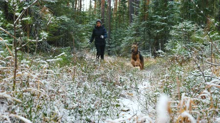 airedale : Young slim woman runs in the forest with a Airedale Terrier dog. The first snow in the autumn forest lies on the dry grass.