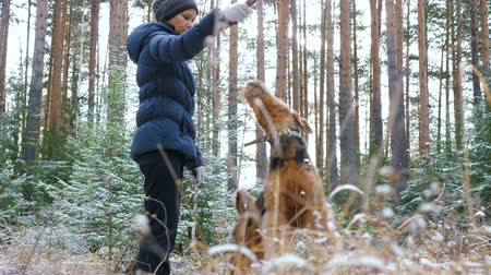 airedale : Young active woman trains in the forest dog breed Airedale Terrier. The first snow in the autumn forest lies on the dry grass.