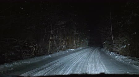 snow covered spruce : The car moves on a snowy forest road at night. Winter season. View from the front window of the car.