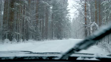 lucfenyő : A car is driving along a snowy forest road in a snowfall. Winter time. View from the front window of the car. Stock mozgókép