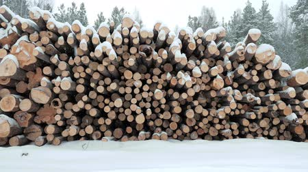picado : Big pile of wooden logs in the winter forest during a snowfall. Slow motion.