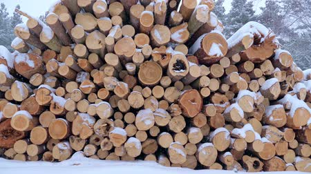 pień : Big pile of wooden logs in the winter forest during a snowfall. Slow motion.