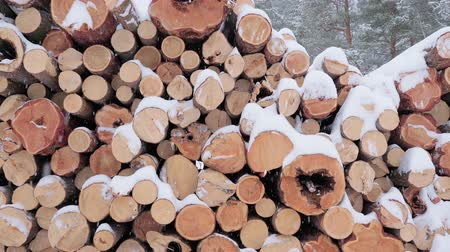 лесозаготовки : Big pile of wooden logs in the winter forest during a snowfall. Slow motion.