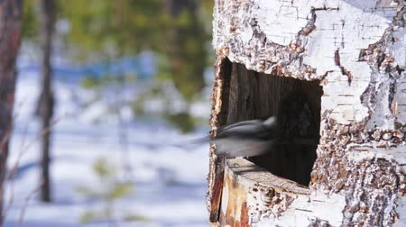 besleyici : Birds eat sunflower seeds from the feeders in the winter forest of a natural park.