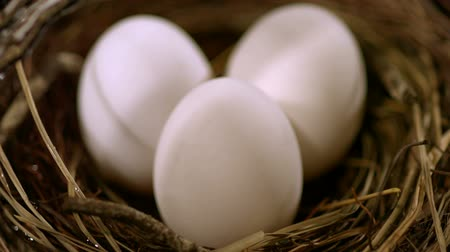 casca de ovo : Three eggs in a nest, Slow Motion Stock Footage