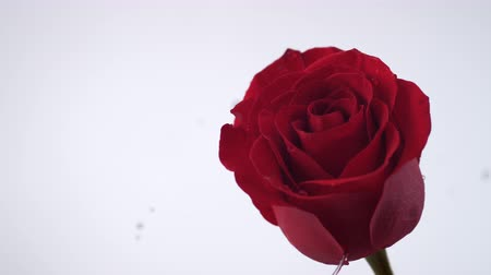 Роуз : Red rose spinning and creating water splash. Shot with high speed camera, phantom flex 4K. Slow Motion. Стоковые видеозаписи