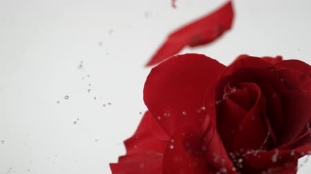 Роуз : Red rose spinning and creating water splash. Shot with high speed camera, phantom flex 4K.  Slow Motion.