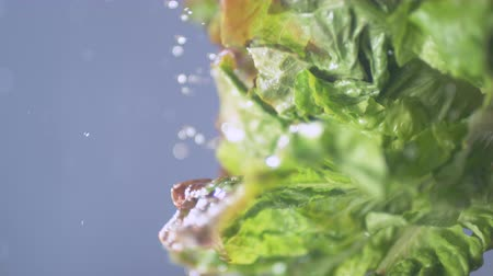 myjnia : Fresh lettuce being washed making water spray. Shot with high speed camera, phantom flex 4K. 4K 30fps. Slow Motion. Wideo