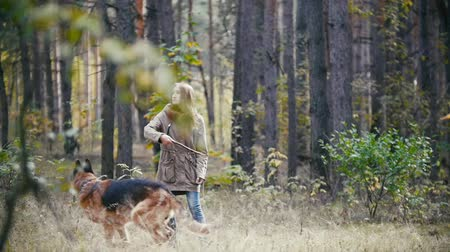 pásztor : Young attractive woman with red hair playing with her pet - german shepherd - walking at autumn forest - the dog runs into the Bush for a stick, slow motion