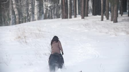 herélt ló : Female rider riding black horse through the snow, dog running nearby, slow-motion Stock mozgókép