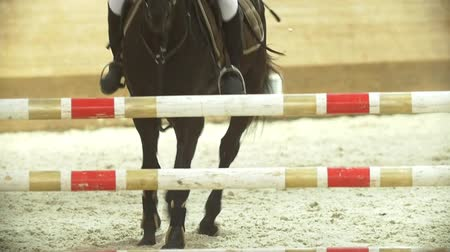 yele : Female equestrian rider running on stallion at show jumping competition Stok Video