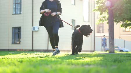 terier : Girl and dog on a leash running through the Park on the background of trees and buildings, summer day Wideo