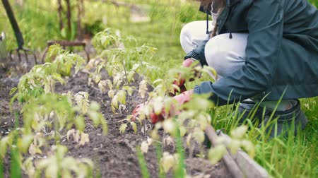 gumboots : Famale weeding the soil with a rake, summer day in garden Stock Footage