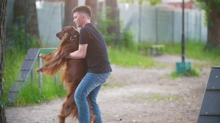 послушный : Young man whirling a dog irish setter in his arms outdoors at summer park Стоковые видеозаписи