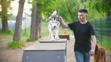 imbir : Young man trains husky dog on the overpass on playground in summer park