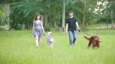 házigazda : Man and woman - family couple with pets dogs walking in park - irish setter and husky Stock mozgókép