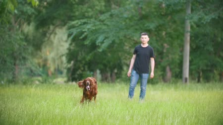 послушный : Man plays with his pet dog - irish setter. Male throws branch in grass