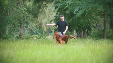 imbir : Young man plays with his pet dog - irish setter. Male give him branch of the tree Wideo