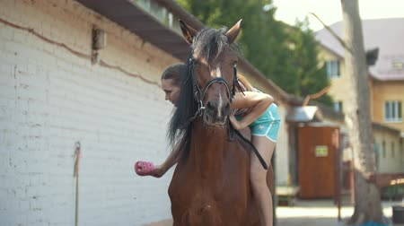sela : A girl preparing a horse for a ride in stable.