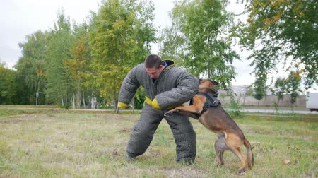 művelt : Man in a protective suit coaches his shepherd dog to attack