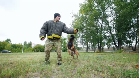 protective suit : A man trains his dog to execute jump command and bite his hand
