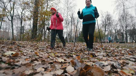 yaşlılar : Two elderly women starts walking on sticks of nordic walking. Walking on a dead leaves