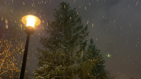 sokak lâmbası direği : A spruce on night street with turned on lights. Snowfall Stok Video