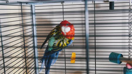 levrek : A beautiful colorful parrot in the cage.