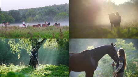 amazzone : 4 in 1: young woman riding a horse in nature. foggy weather