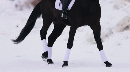 koňmo : A young woman riding a horse in a village. A horse walking on a snowy ground Dostupné videozáznamy