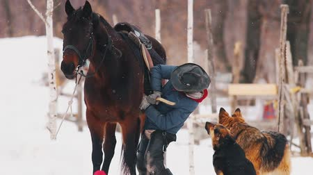 beygir gücü : Winter time. A woman sets the saddle on the horse Stok Video