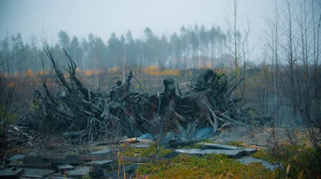 borowina : An extinguished smokey torch in the forest - a mystical landscape