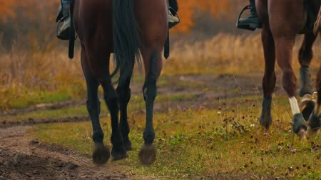 kutyák : Two women riding horses on the autumn field